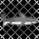 Shark Fish Specie Icon