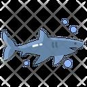 Shark Sea Fish Sea Animal Icon