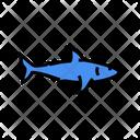 Shark Ocean Underwater Icon