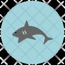 Shark Animal Icon