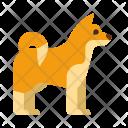 Shiba Icon