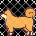 Shiba Dog Icon