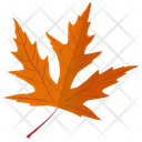 Silver Maple Icon