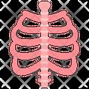 Skeletal System Bones Skeleton Icon