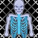 Human Skeleton Anatomy Icon
