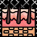 Skin Hair Organ Icon