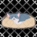 Sleeping Cat Cat Kitten Icon
