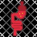 Small Intestine Icon