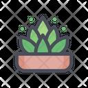 Ornamental Plants Tree Plant Icon