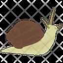 Snail Animal Wildlife Icon