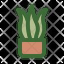 Snake Plant Sansevieria House Plant Icon