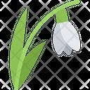 Snowdrop Flower Nature Icon