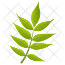 Sorbus Americana Icon
