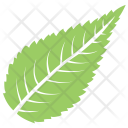 Sour Cherry Plant Tree Icon