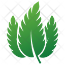 Sour Cherry Leaves Leaves Leaves Logo Icon