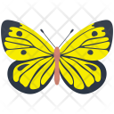 Southern Dogface Butterfly Icon