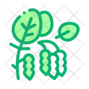 Soy Beans Plant Icon