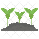 Soy Plant Icon