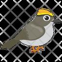 Sparrow Bird Gauraiya Bird Icon