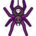 Spider Insect Zoology Icon