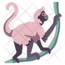 Spider Monkey Icon