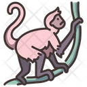 Spider Monkey Monkey Wild Animal Icon
