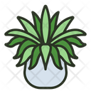 Spider Plant Leaf Nature Icon