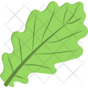 Spinach Leafy Vegetable Icon