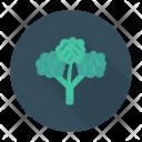 Leaf Vegetable Nature Icon