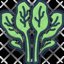 Spinach Leafy Green Icon
