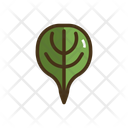 Spinach Vegatable Plant Icon