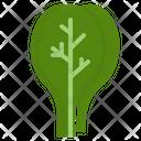 Vegetable Food Vegetarian Icon