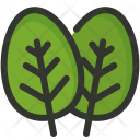 Spinach Vegetable Plant Icon