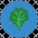 Spinach Green Leaf Icon