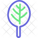 Spinach Food Plant Icon