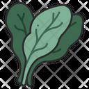 Food Healthy Spinach Icon