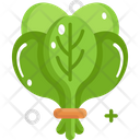 Spinach Vegetable Vegetarian Icon