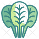 Spinach Vegetable Food Icon