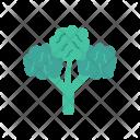Spinach Leaf Icon