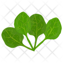 Spinach Leaves Green Icon
