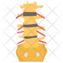 Spinal Column Icon