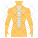 Spine Anatomy Icon
