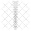 Spine Vertebrae Icon