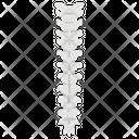 Vertebral Column Spine Vertebrae Spinal Cord Segment Icon