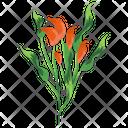Spiraea Flower Flower Spring Flower Icon