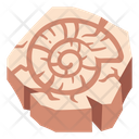 Shell Fossil Spiral Icon