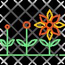 Spring Season Sun Icon