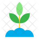 Plant Small Tree Nature Icon