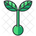 Sprout Seed Icon