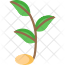 Sproutv Sprout Plant Icon